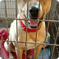Adopt A Pet :: Fred - Hanna City, IL