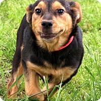 Adopt A Pet :: Libby - Glastonbury, CT