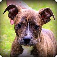 Adopt A Pet :: Bentley~adopted! - Glastonbury, CT