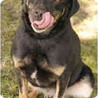 Adopt A Pet :: Monty - Chicago, IL