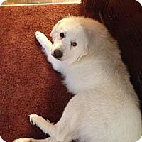 Adopt A Pet :: Delilah - Dandridge, TN