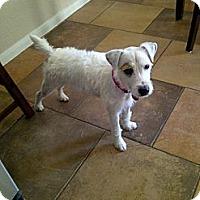 Adopt A Pet :: Benson in Beaumont - Houston, TX