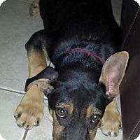 Adopt A Pet :: Arya - Scottsdale, AZ
