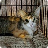 Adopt A Pet :: Paisley - Laguna Woods, CA