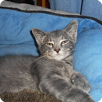Adopt A Pet :: Marty - Richland, MI