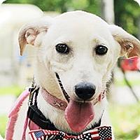 Adopt A Pet :: Millie - Surrey, BC