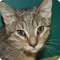 Adopt A Pet :: Howie (LE) - Little Falls, NJ
