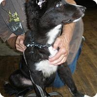 Adopt A Pet :: Jax - Sun Valley, CA