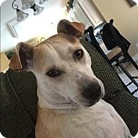 Adopt A Pet :: Missy - Springfield, MA