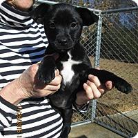 Adopt A Pet :: EMMIE LOU - Brookside, NJ