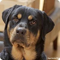 Adopt A Pet :: Moose - Knoxville, TN