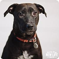 Adopt A Pet :: Lizzie - Portland, OR
