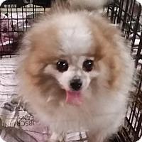 Adopt A Pet :: CHANCE - Longview, WA