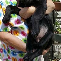 Adopt A Pet :: Bear LOVES water - Baileyton, AL