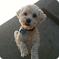 Adopt A Pet :: Kiley - Los Angeles, CA