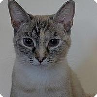 Adopt A Pet :: Halle - Lighthouse Point, FL