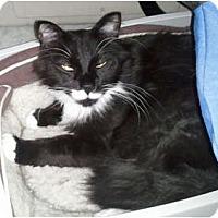 Adopt A Pet :: Goliath - Anchorage, AK
