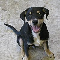 Adopt A Pet :: Ferb - Snellville, GA