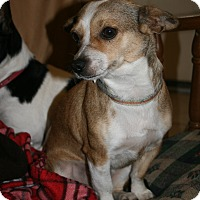 Adopt A Pet :: CANDY - Sugar Land, TX