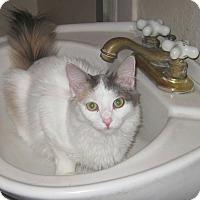 Adopt A Pet :: White - Modesto, CA