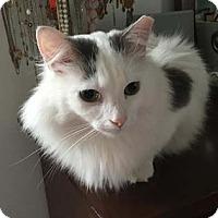Adopt A Pet :: Luna - Merrifield, VA