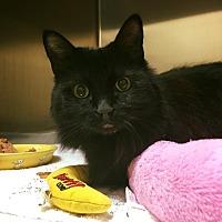 Adopt A Pet :: Alaska - Chicago, IL