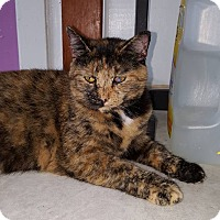 Adopt A Pet :: Freckles - Indianapolis, IN