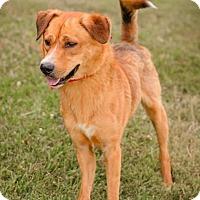 Adopt A Pet :: Pretty Boy - RESCUED! - Zanesville, OH