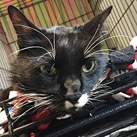 Adopt A Pet :: Sylvester - Lafayette, NJ