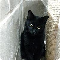 Adopt A Pet :: Trish - Montgomery City, MO