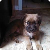 Adopt A Pet :: Mork - Bernardston, MA