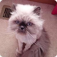 Adopt A Pet :: Kiki - Naperville, IL