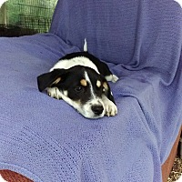 Adopt A Pet :: Jessica meet me 4/21 - Manchester, CT
