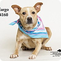 Adopt A Pet :: Margo - Baton Rouge, LA