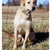 Adopt A Pet :: Buffy - Marion, KY