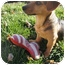 Photo 4 - Dachshund Mix Dog for adoption in Xenia, Ohio - Danny