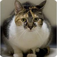 Adopt A Pet :: Juno - Chicago, IL