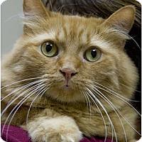 Adopt A Pet :: Shamsie - Chicago, IL