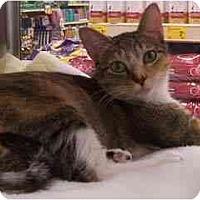 Adopt A Pet :: Autumn - Scottsdale, AZ