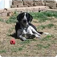 Adopt A Pet :: Jerry - Wahoo, NE