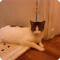 Adopt A Pet :: Orville - Brooklyn, NY