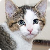 Adopt A Pet :: Milo - Irvine, CA