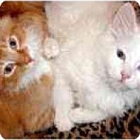 Adopt A Pet :: Seaford & Sapphire - Arlington, VA