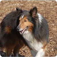 Adopt A Pet :: Cash - Ft. Myers, FL