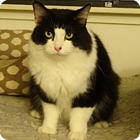 Adopt A Pet :: GUCCI - Diamond Bar, CA