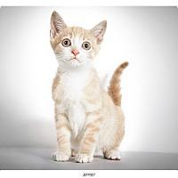 Adopt A Pet :: Jeffrey - New York, NY