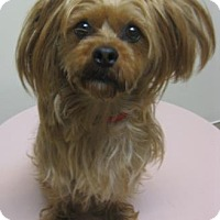 Adopt A Pet :: Hairy - Gary, IN