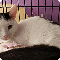 Adopt A Pet :: Frankincense - Middletown, NY