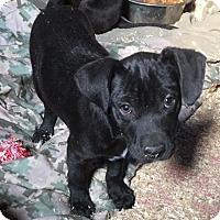 Adopt A Pet :: puppies - Wanaque, NJ