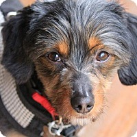 Adopt A Pet :: Bismarck - Orangeburg, SC